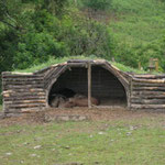 Iron age pigs shelter from the rain in an iron age pig-stye.