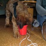 Kite's erste TrickdogStunde