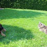 ........dass es außer hunde noch andere Tiere gibt,die sehr gefährlich aussehen(aber nur so aussehen)