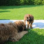 ...,dass es außer Mama noch andere große blonde Hunde gibt