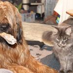 Fjäll rettet seinen Knochen vor Cougar