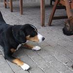 1.Kontakt zum fremden Hund Foto:B.Z.