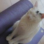 ヨーギーニ猫、イチコナーンダジ(笑)。