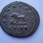 Revers: P M TR P XIII / C VI P P, branche de palmier dessous, lion à g une tête de boeuf entre les pattes, SUP rare (RR)