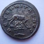 Revers: AETERNITAS AVG / palme, louve allaitant Romulus et Remus, SUP, rare (RR)