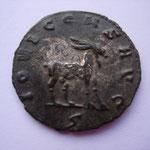 Revers: IOVI CONS AVG  ç ou S, chèvre à droite, TTB très rare MIT 731 k (RR) Wolkow 18c6 R4