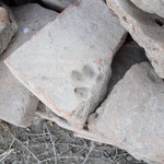 Tierpfote in römischem Tonziegel - ein Fußabdruck für die Ewigkeit... :-)