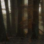 """""""Märchenwald"""" von Klaus Fuchs, 2. Platz (01/2013)"""