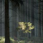 """""""Sonnenstrahl"""" von Klaus Fuchs, 1. Platz (04/2013)"""