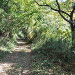 癒される森道