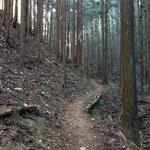 最初こんな山道を歩っていきます