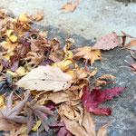石段に残る落ち葉