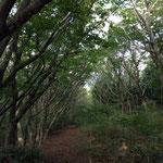 高原キャンプ場への登山道