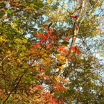 秋、秋、秋・・・