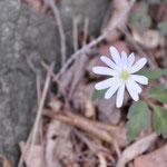 これは何という花??
