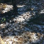昨日ちょっと雪降ったようです