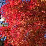 この辺りは紅葉が綺麗です