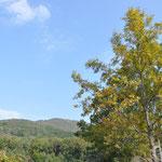 青空と色づいた木々