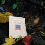 落ち葉と湧水と『紅葉ブレンド』