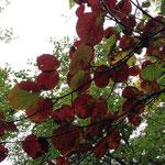 赤く色空いている葉も