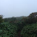 三本槍岳への道