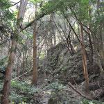 静かな森歩き