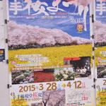 今年の桜まつりのポスター①