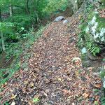 落ち葉の道をGO