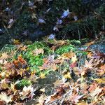 岩の上の落ち葉