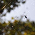 蜘蛛も秋を楽しんでいるかのようです