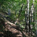 山に登るよりも森を歩くのが好き
