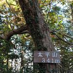 神社奥に山頂があります