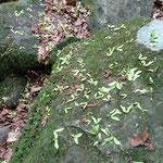 面白い葉っぱがたくさん落ちてます