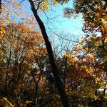碧い空と色づいた木々