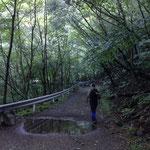 こんな林道をひたすら歩きます