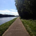 Radweg direkt am Rhein einlang