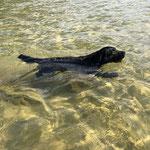 Man kann gut schwimmen, auch #dogfifty