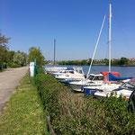 Neckar Blick