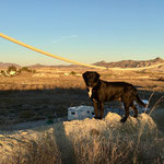 #dogfifty im Sonnenuntergang