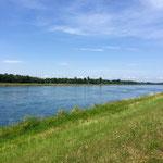 Rhein bei Iffezheim