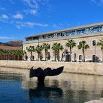 nicht wirklich ein Wal, Uni Cartagena