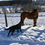 Tierische Begegnung, das Pferd hat draußen übernachtet