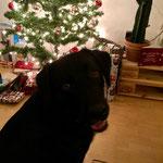 50 bewacht die Weihnachtsgeschenke
