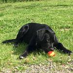Fifty hat einen Apfel gefunden