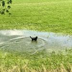 #dogfifty badet in den Überresten der Unwetter