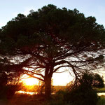 Sonnenuntergang in Agde am Mittelmeer