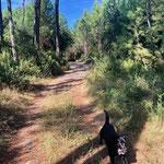 Viele Wege im Wald