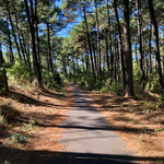 Pinien Wälder ohne Ende, ideal zum Radeln