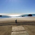 Wetter wieder gut, Sonne und Strand. #dogfifty hat wieder Spass