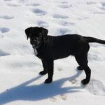 In Stebis im Schnee